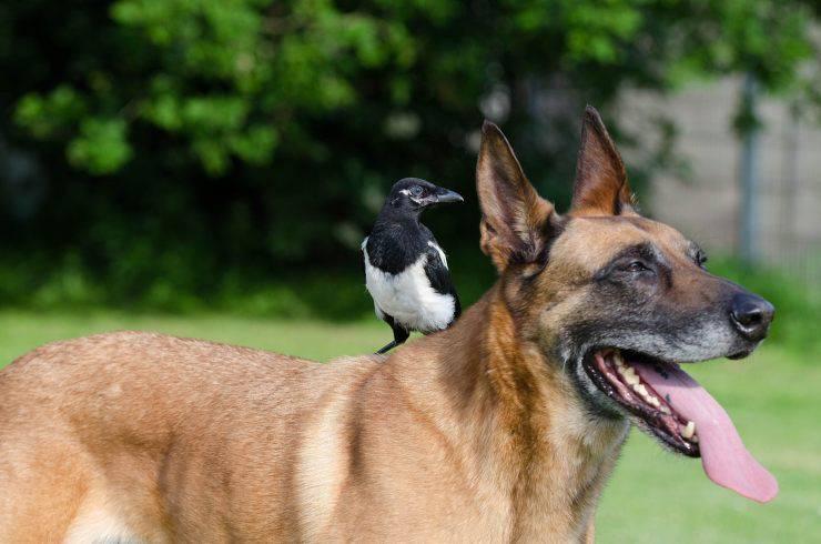 Cane e uccello