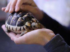 dentro al guscio della tartaruga