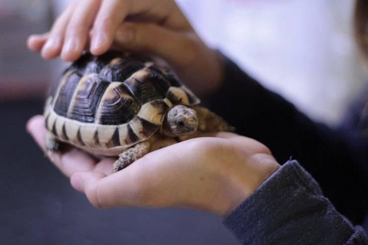 guscio tartaruga