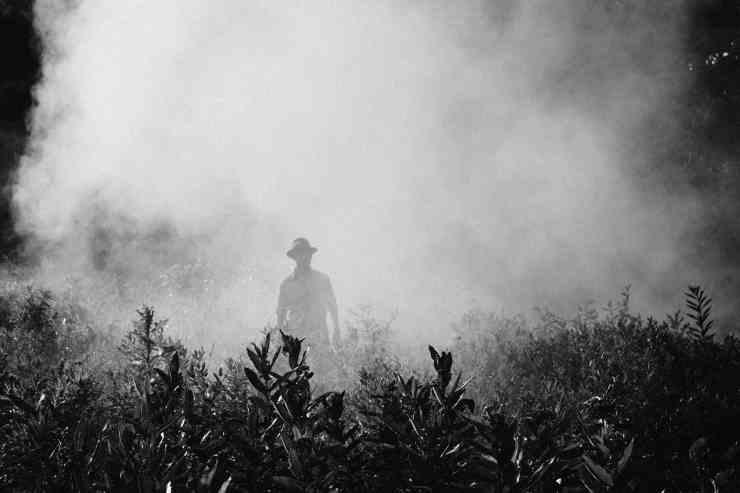 I danni all'ambiente derivanti dall'uso dei pesticidi (Foto Pixabay)