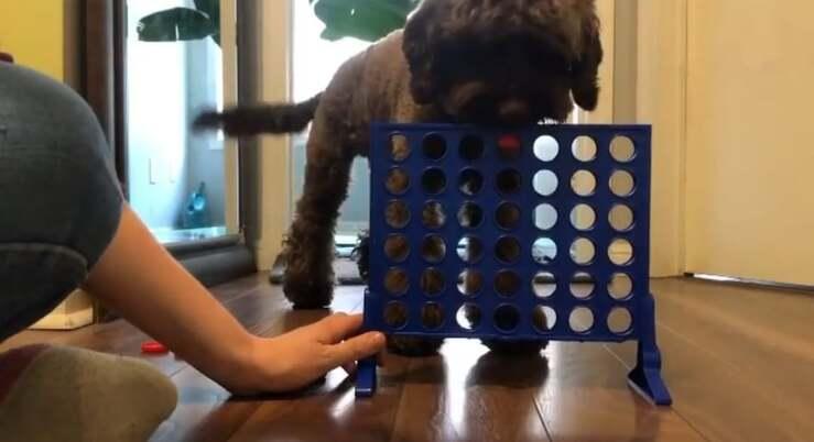 Cane gioca a forza 4
