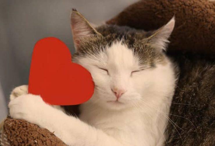 gatto con cuore