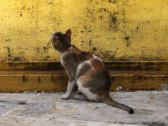 gatto fissa il muro