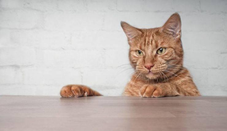 Come evitare che un gatto graffi i mobili