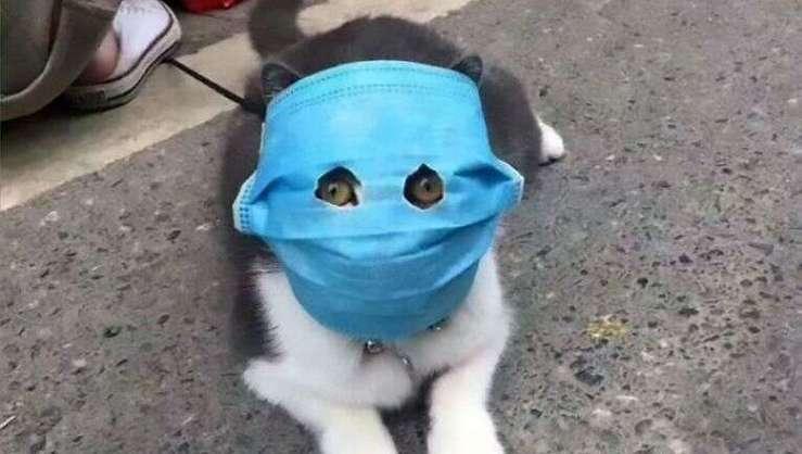 gatto maschera coronavirus