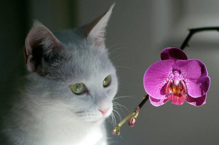 gatto orchidea