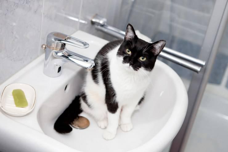 gatto sapone