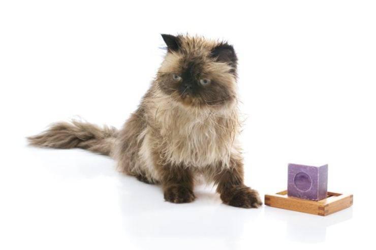 il gatto ha mangiato il sapone