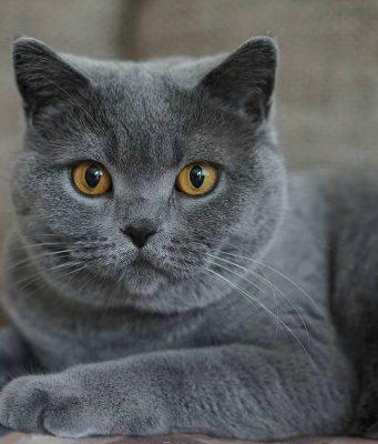 Il gatto conquistatore (Foto Pixabay)