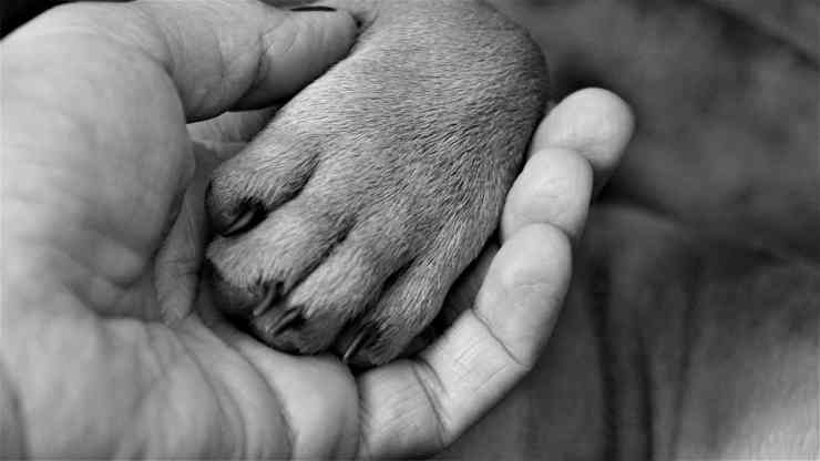 cane salva padrone