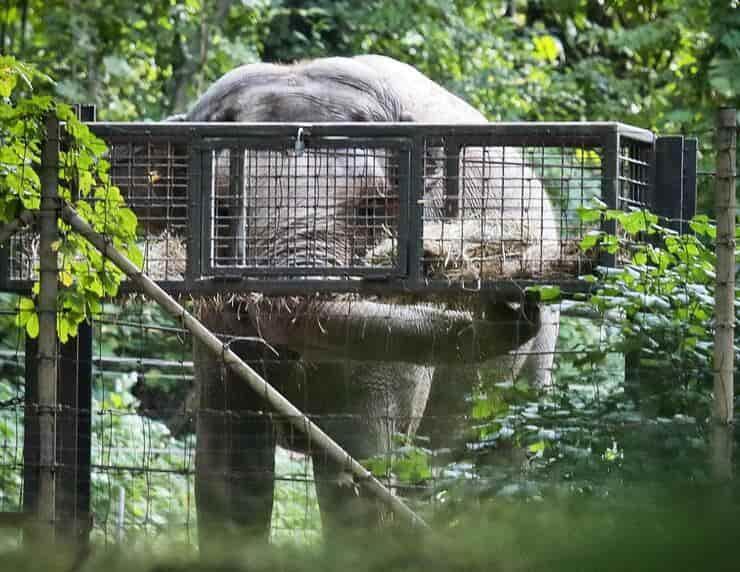 Happy l'elefante