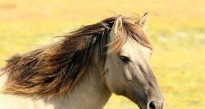 Obesità del cavallo
