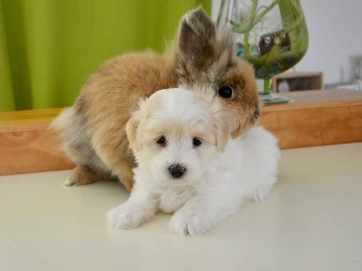 Amicizia tra cane e coniglio
