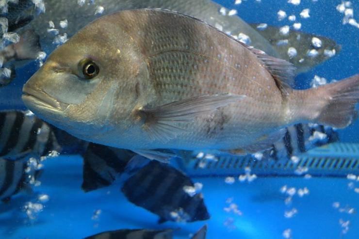 i pesci provano emozioni