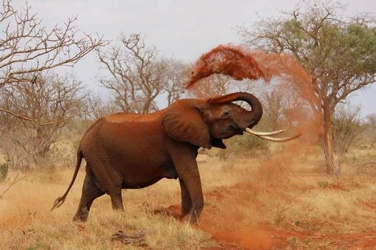 i sensi dell elefante