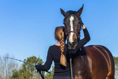 doma etologica cavallo