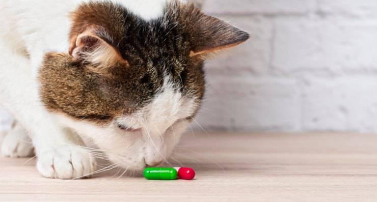 cura gatto medicine