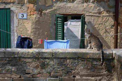 festa nazionale gatto