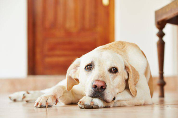 cane ansioso rimedi