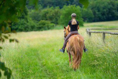 cavallo si blocca non cammina