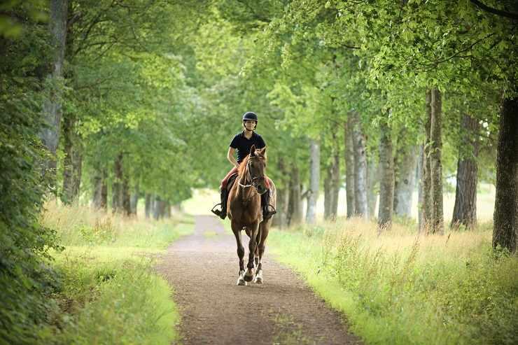 cavallo passeggiata