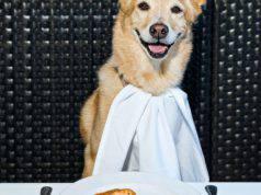 il cane puo mangiare la polenta