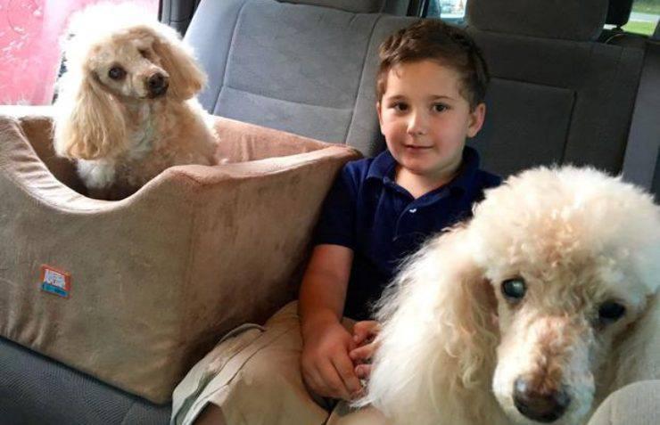 adottare cani anziani