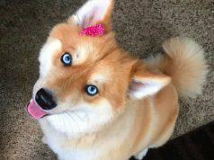 La dolce cagnolina (Foto Instagram)