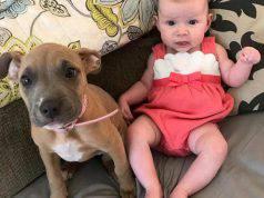 La bambina e il pitbull (Foto Instagram)