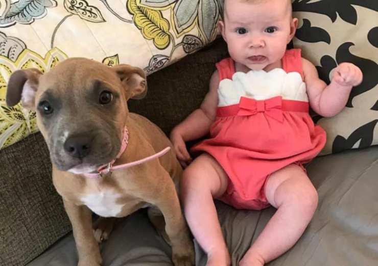 Il cucciolo e la bebè (Foto Instagram)