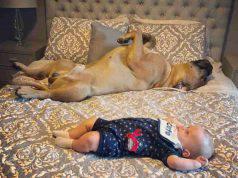 Il cane e il neonato (Foto Instagram)