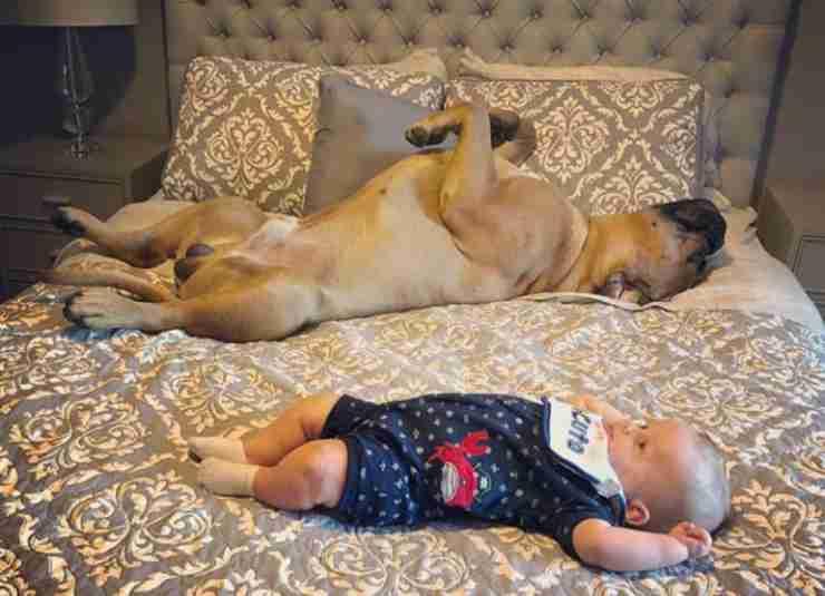Il cucciolo e il neonato (Foto Instagram)