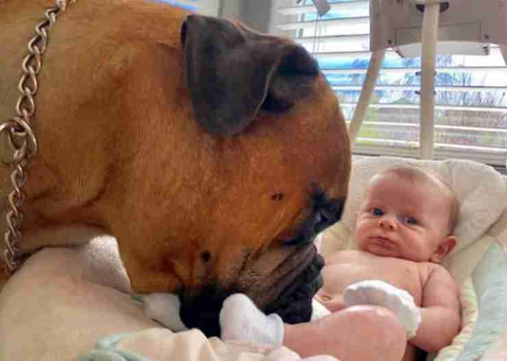 Il cane annusa il neonato (Foto Instagram)