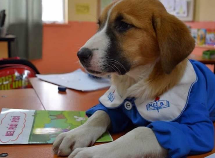 Il cane che segue attentamente le lezione (Foto Facebook)