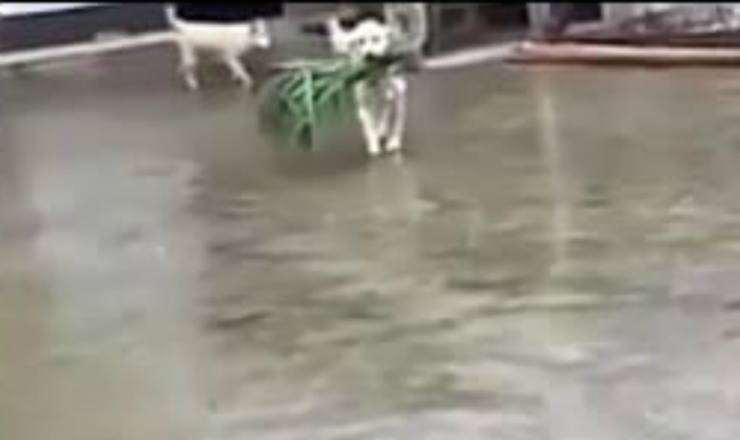 Il cane amico del bufalo (Foto video)