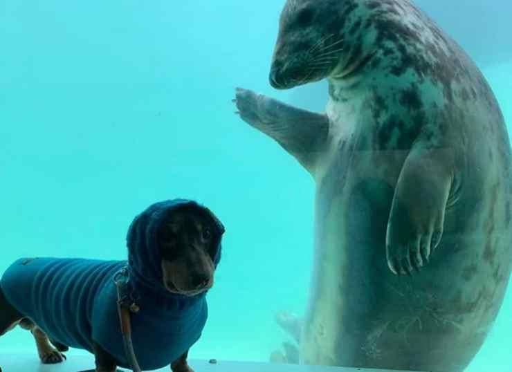 La foca saluta il suo amico (Foto Instagram)