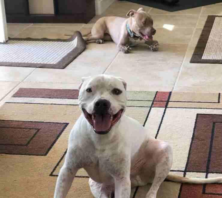 Polpètta e un altro cane (Foto Instagram)