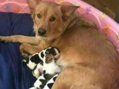 La mamma e i suoi cuccioli (Foto Instagram)
