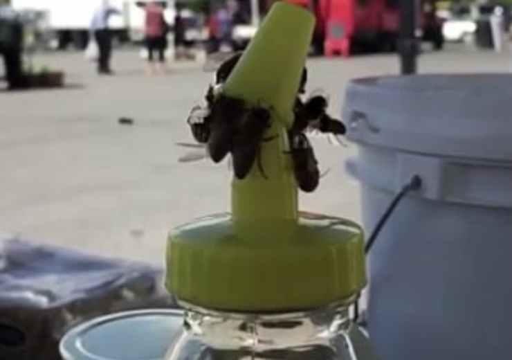 Le api intente ad aprire il tappo (Foto video)