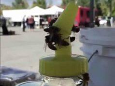 La forza delle api (Foto video)