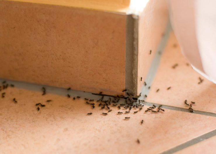 3 cose che attirano le formiche in casa