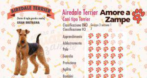 infografica cane AIREDALE TERRIER new