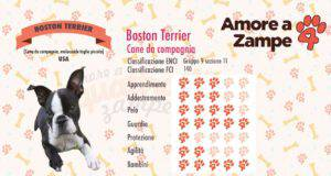 infografica cane BOSTON TERRIER new