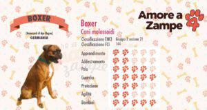 infografica cane BOXER new
