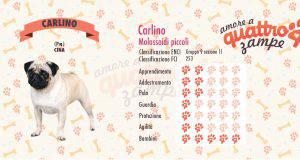 Carlino scheda razza