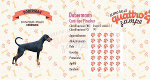 Dobermann scheda razza