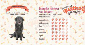 Labrador retriever scheda razza