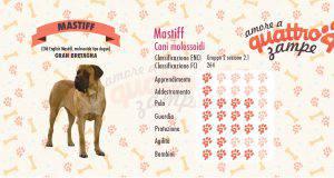 Mastiff scheda razza
