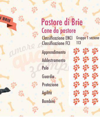 Cane da pastore di Brie scheda razza