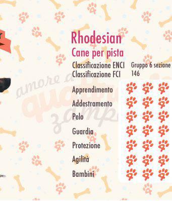 Rhodesian ridgeback scheda razza